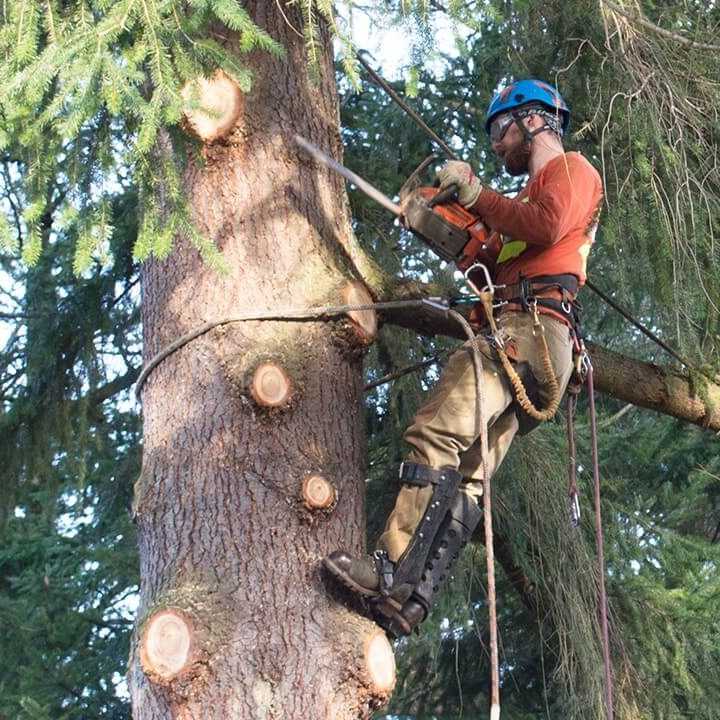 Landmark Tree Care Pruning & Trimming