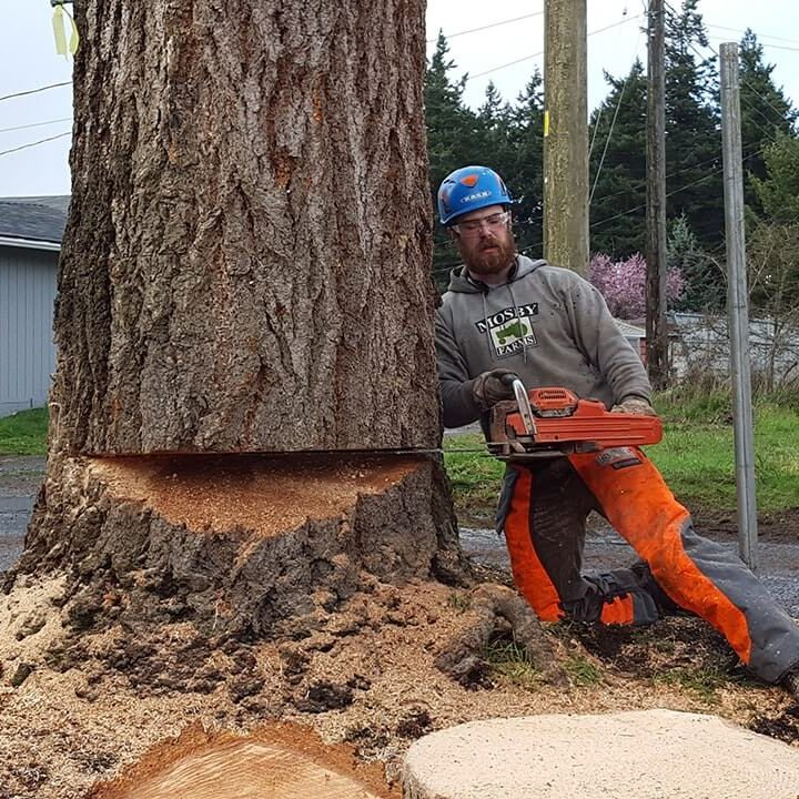 Landmark Tree Care Tree Removal